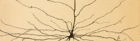 Santiago Ramón y Cajal's neuron
