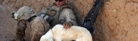 A War Vet's Best Friend:  Cutting the Cost of PTSD Service Dogs