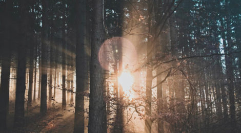 sound, soundscape, bon iver, justin vernon, folk rock, woods, blood bank, music, isolation, loneliness, alone, pain, beauty, redemption, acapella, experimental, mental health