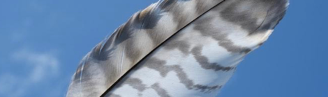 Art, Images, Trauma, Death, Grief, Healing, Ojibwa, Indigenous, Northern Ontario, Seven Fallen Feathers
