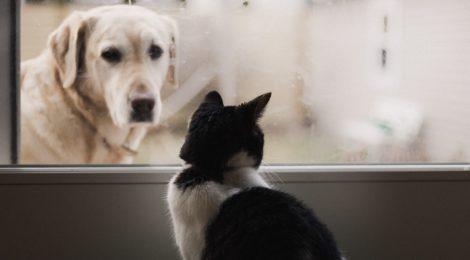 A dog looks at a cat through a glass door.